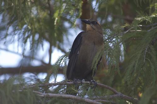 10.16.2011 Birdwatching