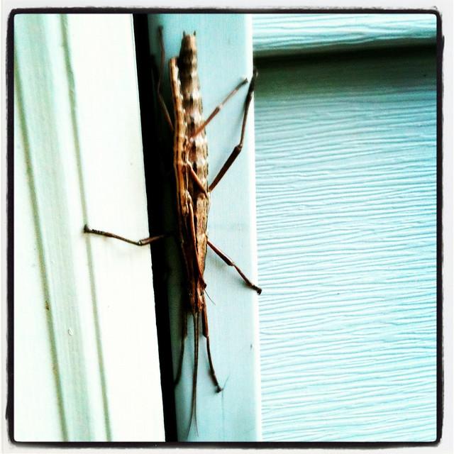 Bugs Doin' It