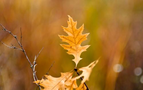Leaf Standing Alone