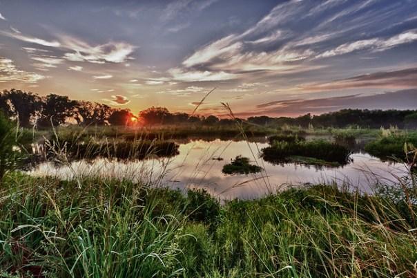 Sunrise marsh