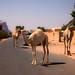 Jordan - Wadi Rum City