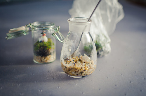 Terrarium Two