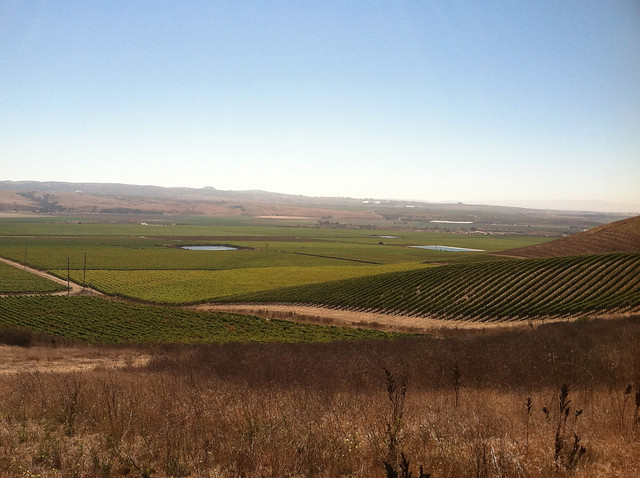 Vineyard 2011 Valley and water.jpg