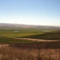 Vineyard Trip 2011