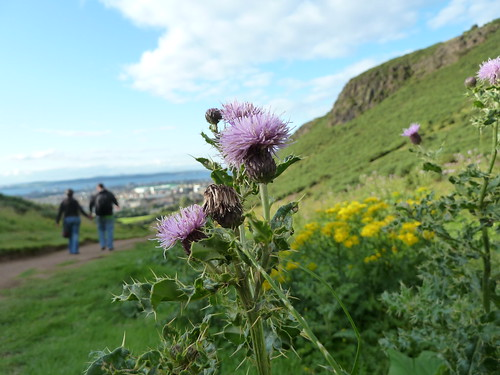 Thistles in Holyrood Park with a couple walking in the background