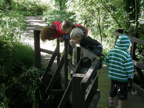Playing pooh sticks