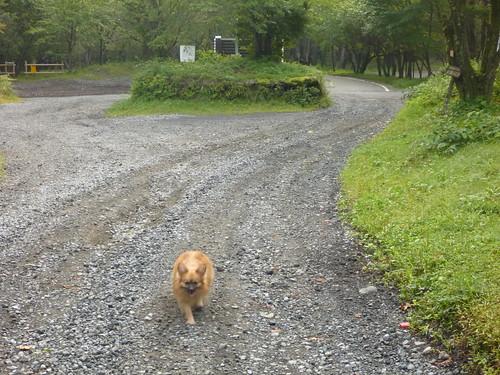 中の茶屋にいた捨て犬, 一合目から富士山に登る Climbing Mt.fuji, from the starting point of Yoshidaguchi Climb Trail