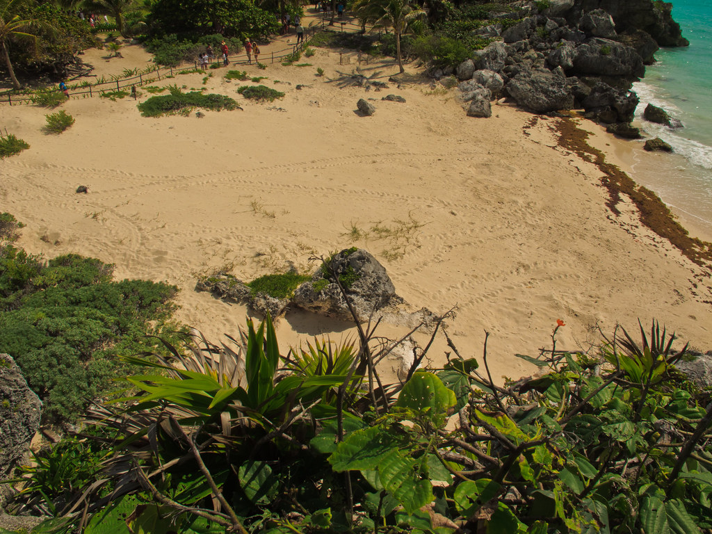 Beach with turtle tracks and egg-laying sites