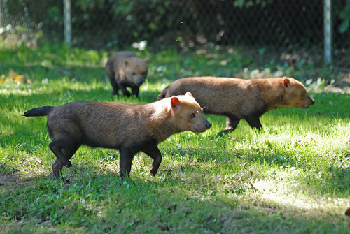 Waldhunde im Gaia Park in Kerkrade