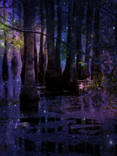 Goodnight on Fairie Swamp Garden