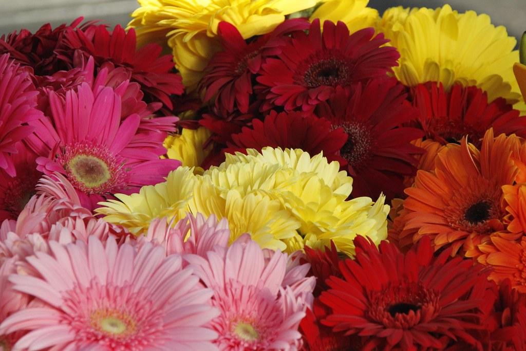 Flores de todos los colores