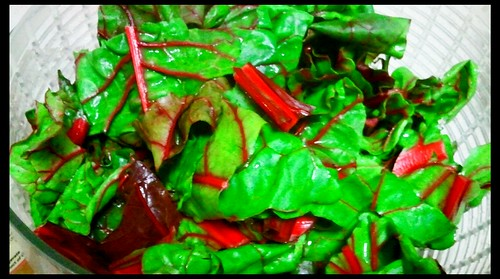 Swiss chard Ankita chopped up for spaghetti sauce