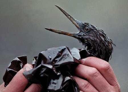 oilspillbird