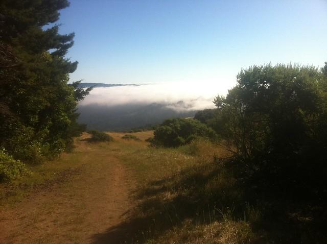 Butano View Fog
