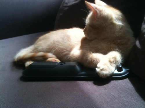 Hogging the Remote