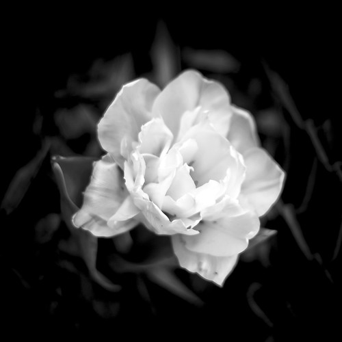 white on black by Matt Hovey