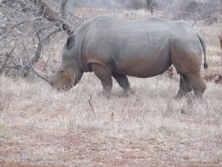 Rhino at Hluhluwe/Umfolozi Game Reserve