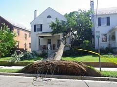 Hurricane Irene, Ward 3 trees down, Aug 28