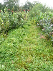 vegetable bed paths