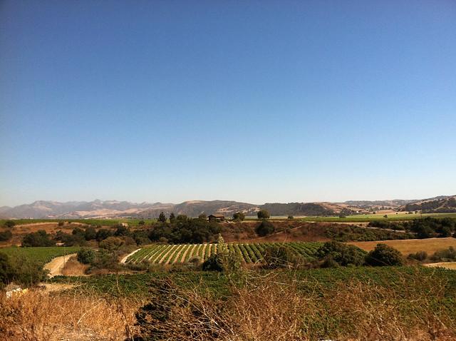 Vineyard 2011 Paradise.jpg