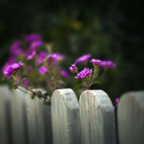 fenced in by Matt Hovey