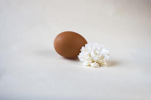 Flower and egg