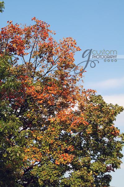 39 - autumn 10