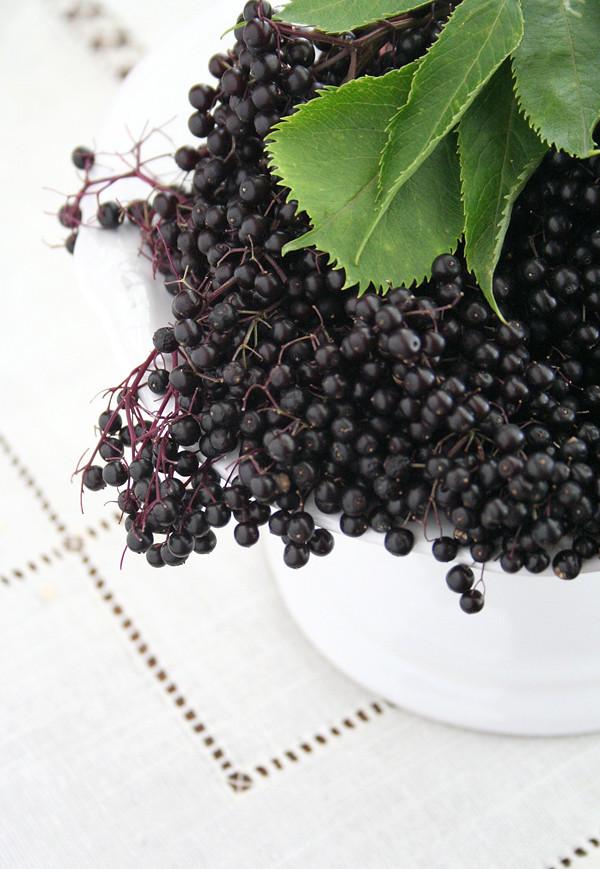 elderberries_2
