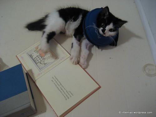 book 8-4-2011 8-27-41 PM