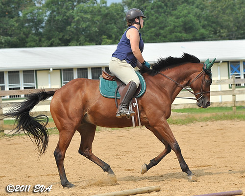 Cantering- left lead