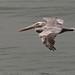 Birds Off the Shell Beach Coast 5