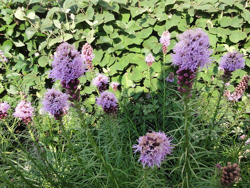 123/365 Purple flowers