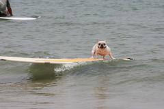 Dog on Board (original)