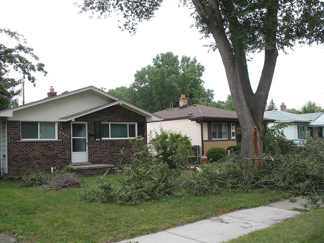 Tree damage, Sept. 6, 2011 (2)