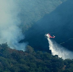 LAFD and Allied Agencies Battle 40-acre 'Mandeville' Wildfire