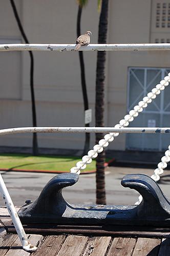 bird on rail