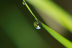 Water droplet