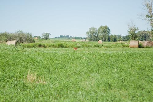 Field-19