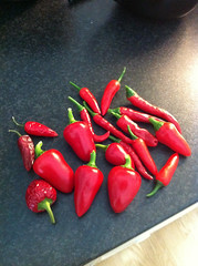 chillies from the garden