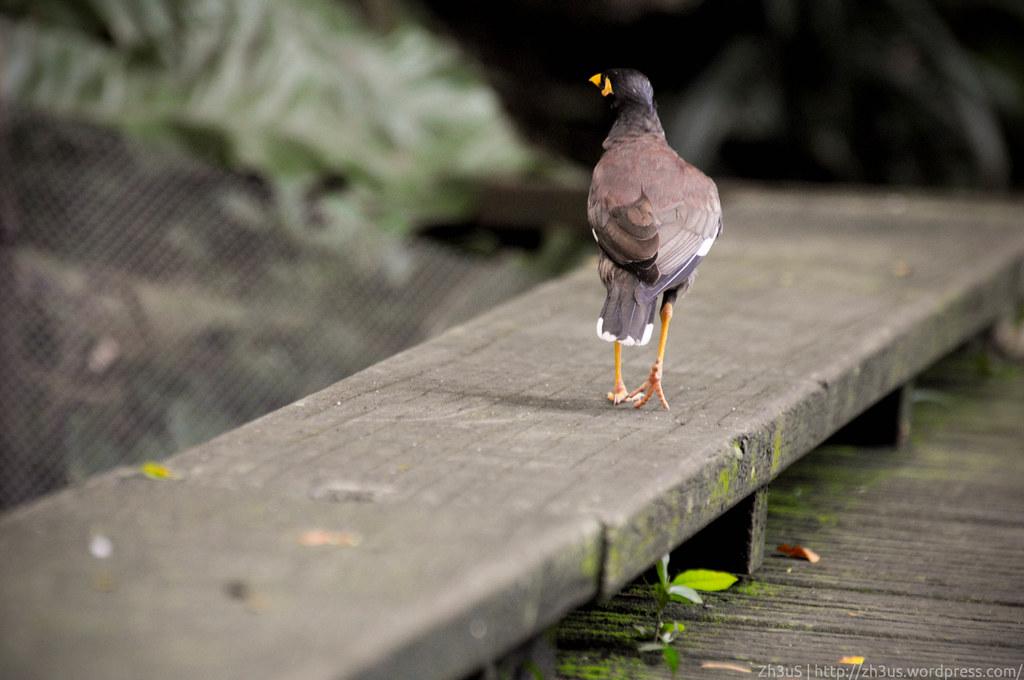 Jurong Birdpark (51 of 89)
