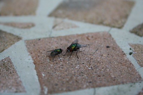 flies outside