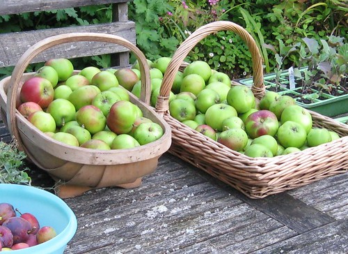 bramleys