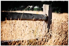 Fence in the field
