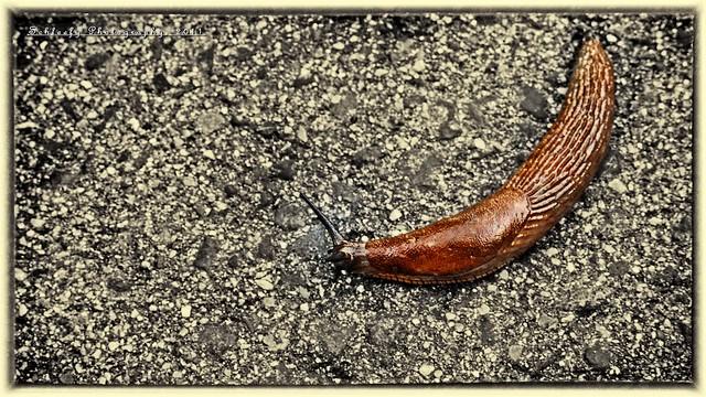 #253/365 Slug...keep moving