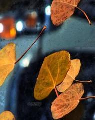 Sierra Fall Colours 09