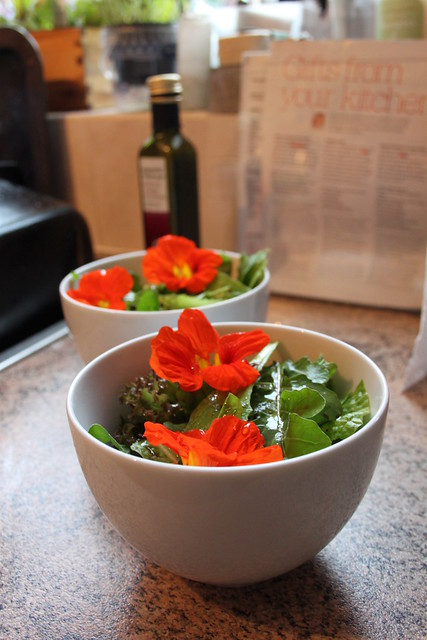 Delicious salad with nasturtium flowers