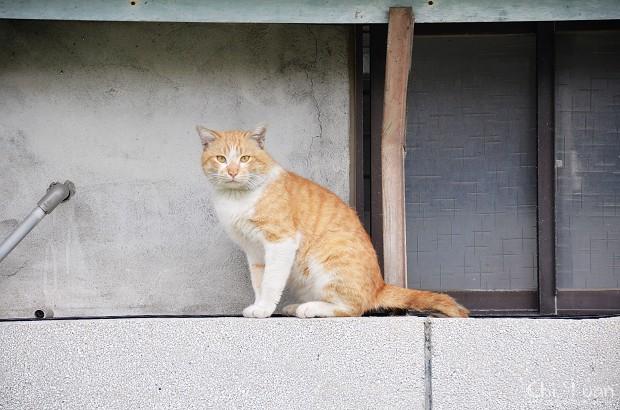 如走鋼索的貓咪07.jpg