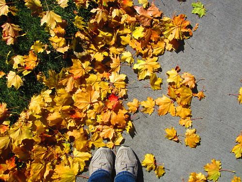 hojas bajo mis pies