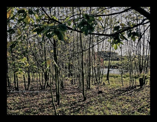 #292/365 Trees