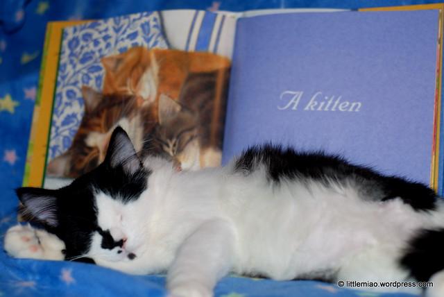book 10-23-2011 1-32-48 PM